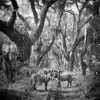 Donkeys at the Welcome Trees - Anne Berry