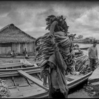 Unloading Banana Boats in Belen - Dave Campbell
